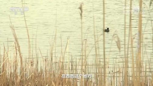 无鱼的湖泊(上) 00:23:14