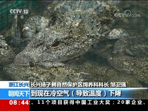 [朝闻天下]浙江长兴 降雪降温 6000多条扬子鳄冬眠
