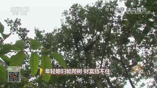 [致富经]找到坏果的原因 会爬树的媳妇财富挡不住