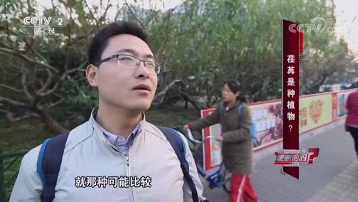 荏苒是种植物 是真的吗 2018.12.15 - 中央电视台 00:05:18