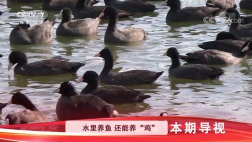 """《科技苑》 20190109 水上有飞""""鸡"""" 水底鱼蟹肥"""