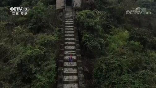 《军迷淘天下》 20190113 我身边的战争遗迹——探秘海龙屯