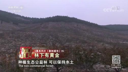 《森林城市》(5) 林下有黄金 走遍中国 2019.02.09 - 中央电视台 00:25:53