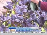 午间新闻广场 2019.2.15 - 厦门电视台 00:20:33