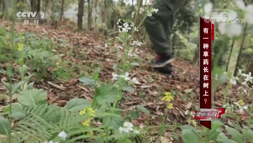 有一种草药长在树上 是真的吗? 是真的吗 2019.03.09 - 中央电视台 00:06:56