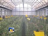 鲜花栽培如何助种植户增收致富? 视点 2019.03.16- 厦门电视台 00:15:09