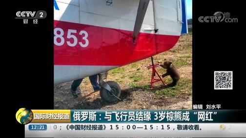"""[国际财经报道]俄罗斯:与飞翔员结缘 3岁棕熊成""""网红"""""""