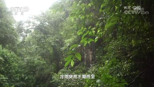 """""""浮石""""传奇(上) 00:24:08"""