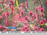午间新闻广场 2019.04.06 - 厦门电视台 00:21:21