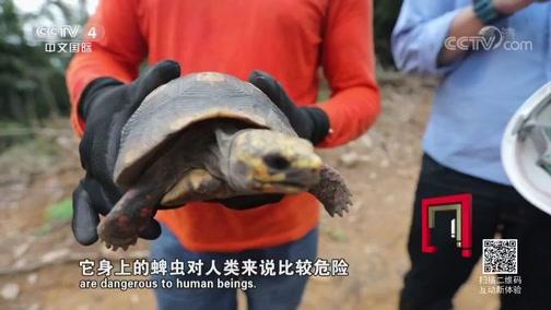 《走遍中国》 20190425 3集系列片《点亮新丝路 》(2)纵横雨林