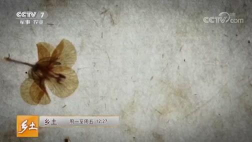 《乡土》 20190502 腾冲的花样春天