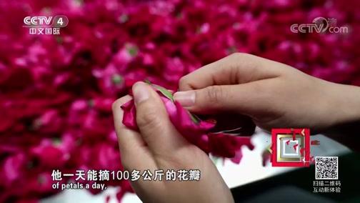 《走遍中国》 20190527 系列片《一路花香》之 玫瑰香自苦寒来