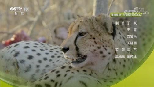 《自然传奇》 20190615 非洲捕食者 下