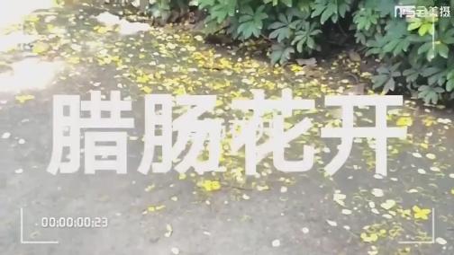 台海视频_XM专题策划_25-腊肠花开 00:00:53