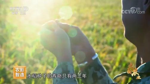 《大国农业》 第一集 种铸基石