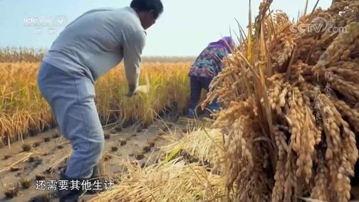 《稻米之路》 第三集 乘风破浪