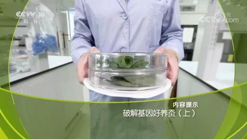 《走近科学》 20190708 破解基因好养蚕(上)