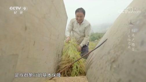 《稻米之路》 第五集 大陆之南