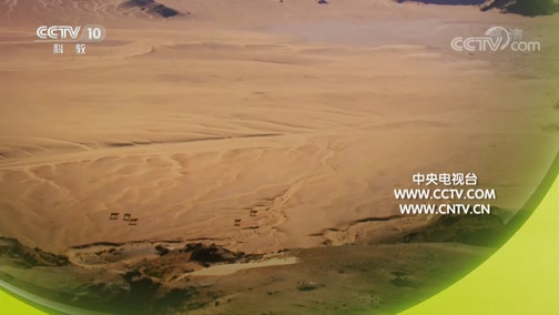 《自然传奇》 20190711 沙漠狮王的故事