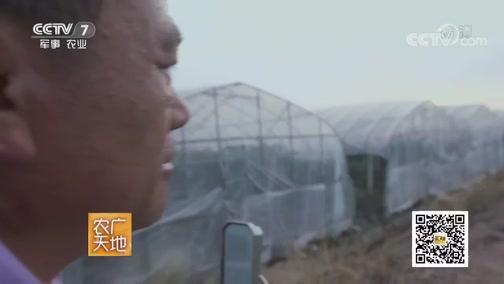 [农广天地]早熟葡萄上市忙