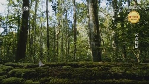 [自然传奇]超神秘!云豹竟是这样寻找伴侣的
