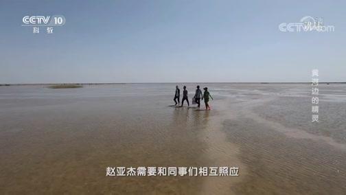 《讲述》 20190720 系列节目《我奋斗·我幸福》 黄河边的精灵