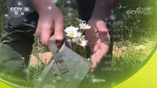 《我爱发明》 20190721 快乐农田1