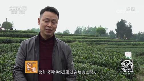 """[农广天地]雅安茶""""应是人间第一茶"""""""