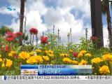 午间新闻广场 2019.08.06 - 厦门电视台 00:21:29