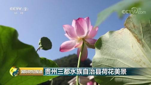 [国际财经报道]贵州三都水族自治县荷花美景