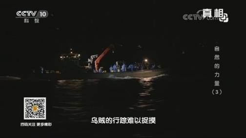 [真相]荧光乌贼为什么会发光?