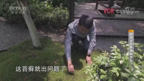 《田间示范秀》 20190826 小苔藓玩出大花样