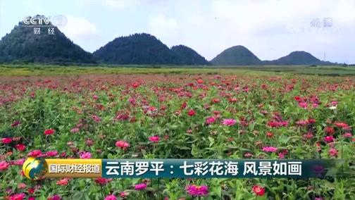 [国际财经报道]云南罗平:七彩花海 风景如画