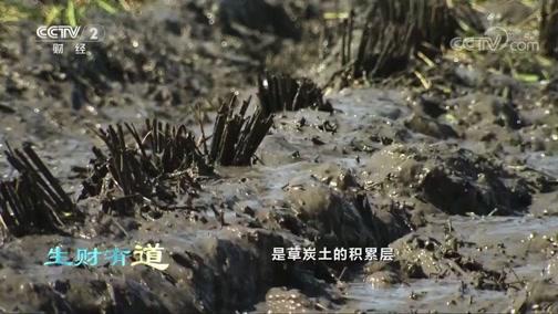 [生财有道]水稻收割现场忙忙碌碌 机械收割加快收割效率