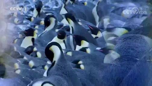 《人与自然》 20200115 卢安瓜河谷——翡翠时节