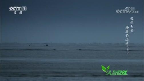 《人与自然》 20200129 聚焦大熊——沸腾的海湾(上)