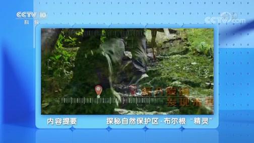 """《地理·中国》 20200208 探秘自然保护区·布尔根""""精灵"""""""