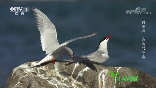 《人与自然》 20200212 博滕海——鸟岛的节奏