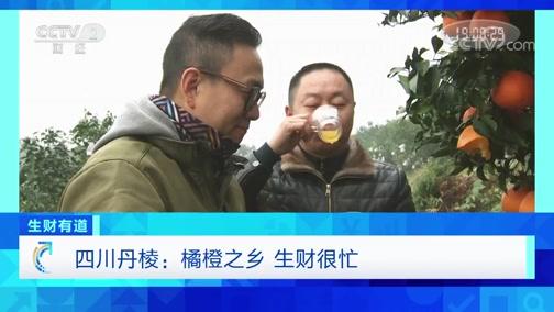 《生财有道》 20200217 四川丹棱:橘橙之乡 生财很忙