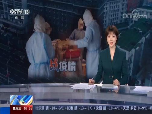 《战疫情特别报道》 20200219 10:00