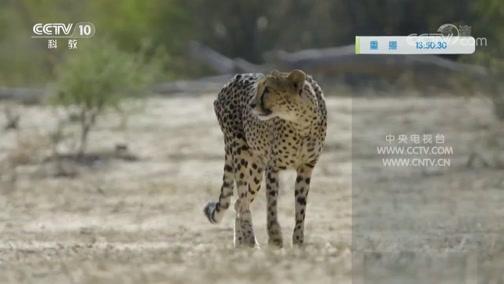 《自然传奇》 20200304 大自然的挑战