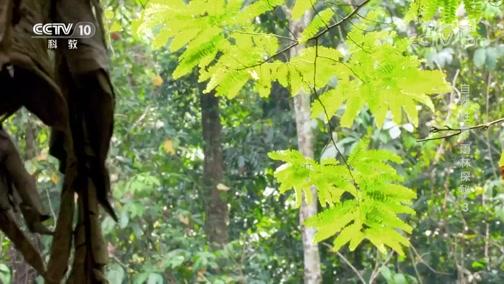 《地理·中国》 20200325 自然胜景·雨林探秘 3
