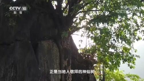 《地理·中国》 20200329 自然胜景·姑婆山的传说 上