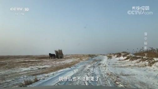 《地理·中国》 20200413 雪中秘影 下