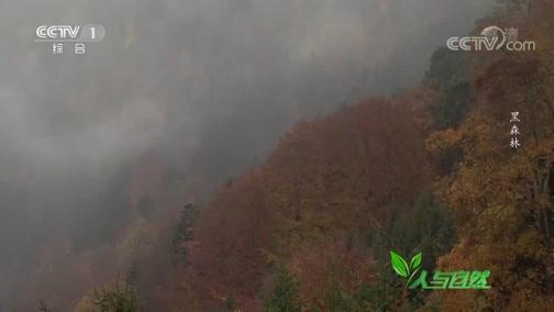 《人与自然》 20200530 黑森林