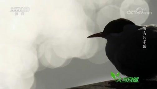 《人与自然》 20200606 海鸟的家园