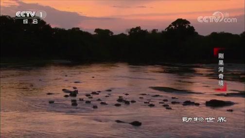 《动物世界》 20200612 刚果河奇境