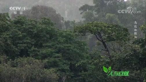 《人与自然》 20200617 马达加斯加