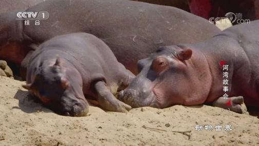 《动物世界》 20200703 河湾故事会(一)