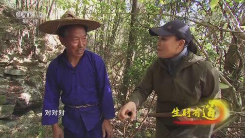 《生财有道》 20200811 浙江庆元:大山深处的生态财富